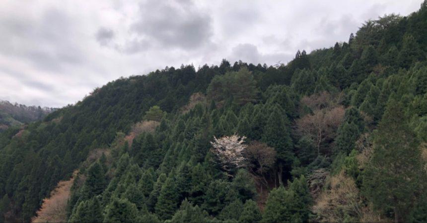高野山は5℃でした⛰