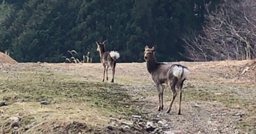 鹿さんが、優雅に食事してました🦌