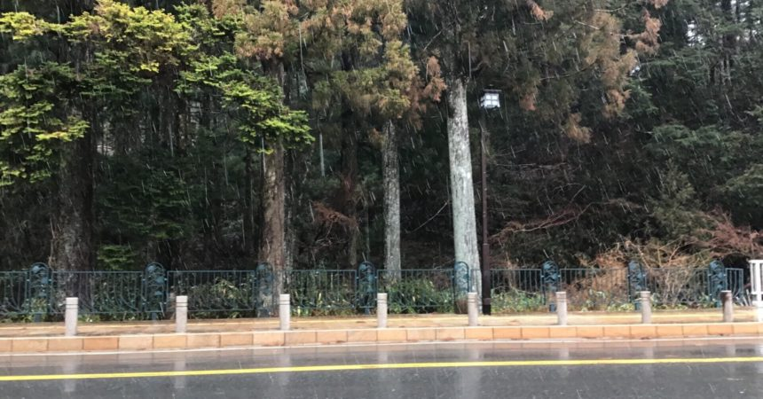 雨がみぞれに🌨