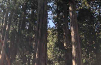杉木立から木漏れ日