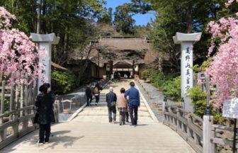 金剛峯寺🌸枝垂れ桜